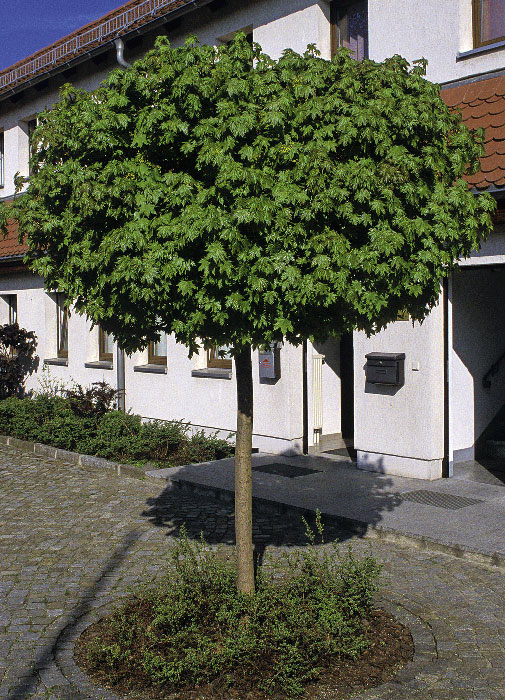 Baum Garten