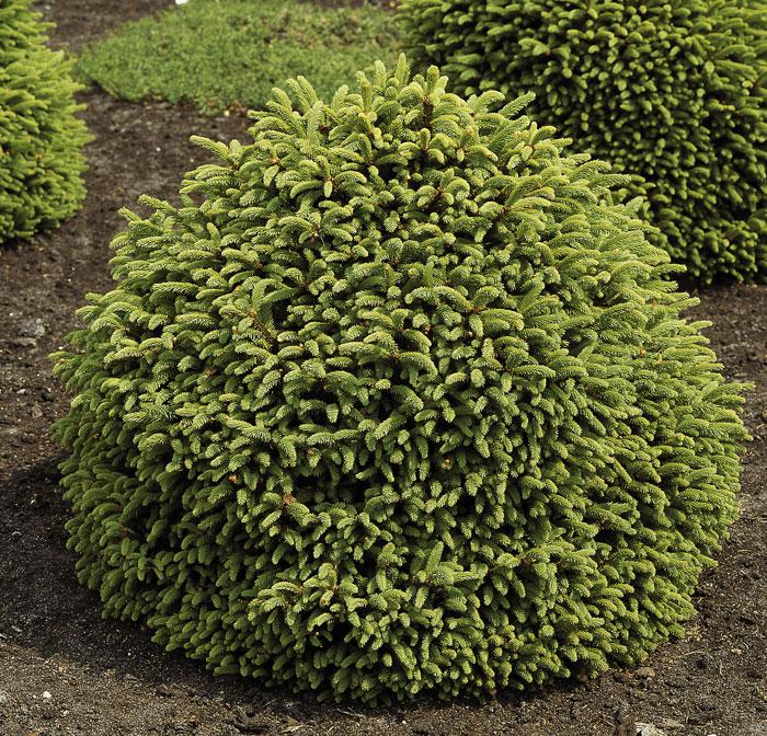 Magnolie Farbe mit nett stil für ihr wohnideen