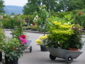 kann man im sommer pflanzen setzen baumschule salzburg spezialist f r gartenbau und. Black Bedroom Furniture Sets. Home Design Ideas