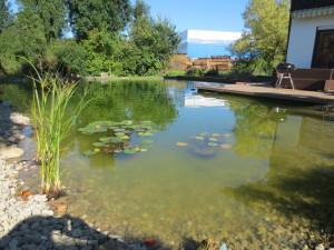 Schwimmteich schottern, bepflanzen und dekorieren