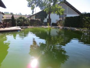 Der fertige Schwimmteich mit 120.000 Liter Inhalt