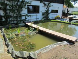 Biofilter bepflanzt