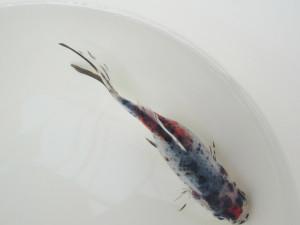 Shubunkin: schwarz gepunktet mit rot, weiß, gelb und blau